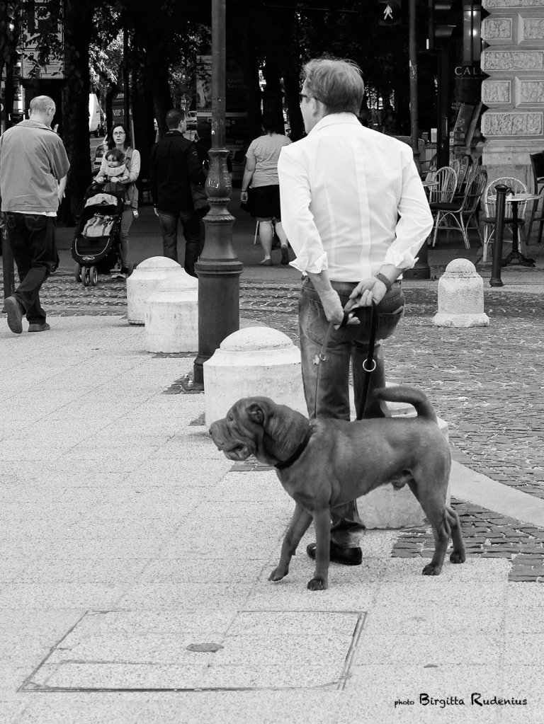 people_20130515_dog2