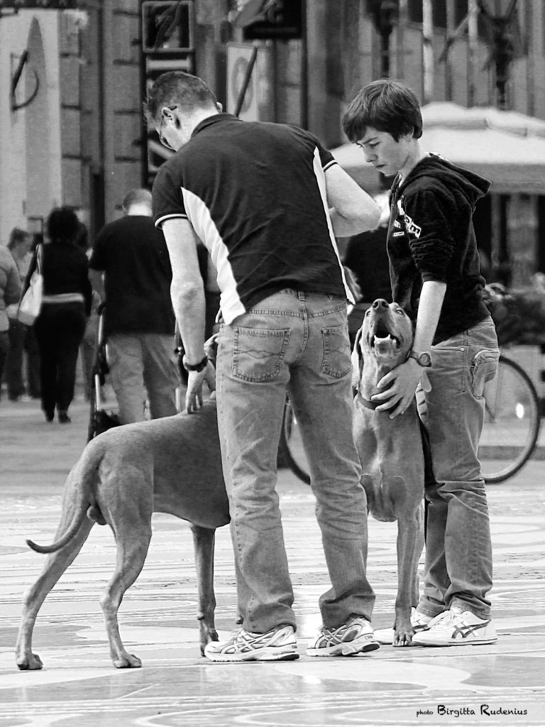 people_20130515_dogs