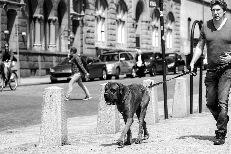 PiPP_20140627_dogwalking
