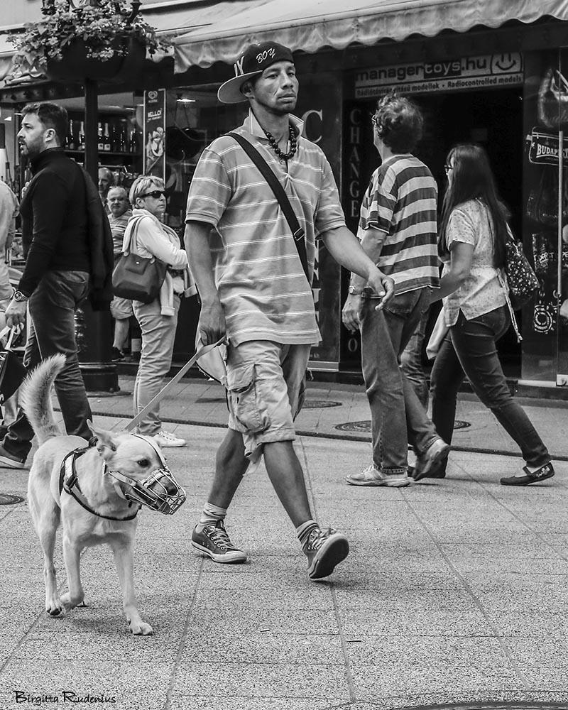 PiPP_20150530_dogcage