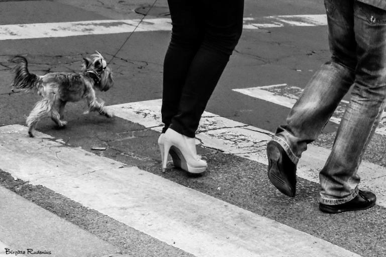 PiPP_20150601_dogwalk